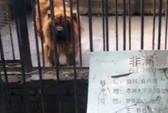 """Sở thú Trung Quốc dùng chó """"đóng giả"""" sư tử"""