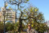 Đà Nẵng: Giá cao ngất, hoa Tết vẫn đắt hàng