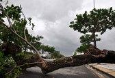 Đà Nẵng: Mưa lớn, cúp điện, gió rít liên hồi
