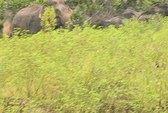20 con voi rừng vào thị trấn quậy