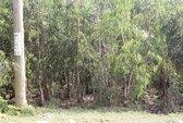 Cô gái trẻ chết lõa thể trong rừng tràm