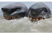 """Bắt được """"quái thai"""" cá mập 2 đầu còn sống"""
