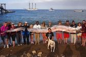 15 người khiêng cá rắn khổng lồ lên bờ