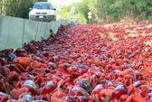 """Đảo Chrismas đỏ rực vì cua """"hành hương"""""""