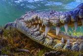 Khoảnh khắc nhiếp ảnh gia đối mặt với hàm cá sấu