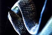 Đi tìm rắn chúa Xa Mát