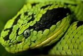 Gây sốc vì mang thịt rắn từ VN sang New Zeland