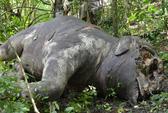 """Rối ren Vườn quốc gia Yok Đôn: Cần thiết thì sẽ """"thay máu"""""""