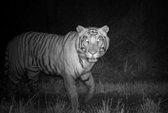 Hổ thích nghi để cùng tồn tại với người