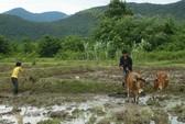 Điều tra vụ chiếm đất công ở Ninh Thuận