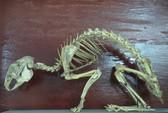Mốt chơi quái dị: Kết bạn với... xương
