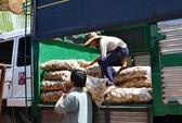 Khoai tây Trung Quốc tìm đường ra chợ