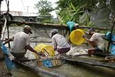 Tin vui cho ngành cá tra