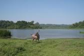 Lo ngại 2 dự án thủy điện trong vùng đệm Vườn Quốc gia Cát Tiên