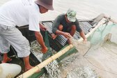 Bấp bênh nước sông Mê Kông