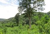 Bộ TN-MT kết luận: Dự án Đồng Nai 6 và 6A phá rừng, phạm luật!