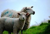 Giết cừu tế thần, đội bóng Kazakhstan làm liên lụy đến UEFA