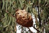 Đàn ong vò vẽ chích bé trai hơn 110 đốt