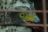 Chim lạ bị người dân bắn hạ