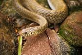 Vì sao con người sợ rắn?