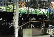 Chuồng bò nằm cạnh trường học