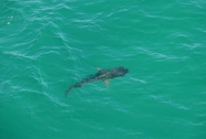 Cảnh báo cá mập bằng Twitter