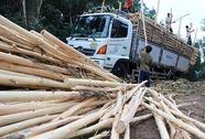 Trắng tay vì góp đất trồng rừng
