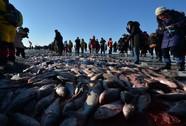 Âm 22 độ C, đổ xô đi câu cá