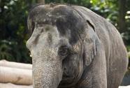 Những con vật nổi tiếng nhờ nói được tiếng người