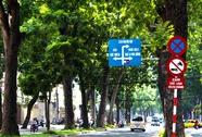 TP HCM sẽ đốn hàng loạt cây xanh đường Tôn Đức Thắng