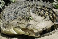 Bắn chết cá sấu tấn công người