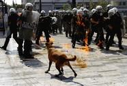 """Vĩnh biệt """"chú chó biểu tình"""" nổi tiếng"""