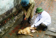 Bùng phát dịch chó dại ở Thanh Hóa, 10 người thương vong