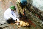 Dịch chó dại bùng phát, thêm 1 nạn nhân tử vong