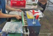 """Vụ """"thương lái Trung Quốc mua lá khoai lang"""": Cái lá cũng có giá"""