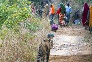 Ấn Độ: Bắn chết hổ cắn chết người