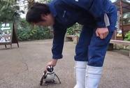 """Bé chim cánh cụt """"cuồng yêu"""""""