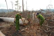 Nhẹ tay với doanh nghiệp làm mất rừng