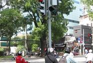 Đèn giao thông giữa đường