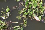 Âm thầm đầu độc kênh Nhiêu Lộc - Thị Nghè