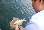 Cá chết đầy hồ