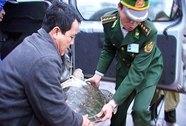 Rùa biển liên tục xuất hiện ở Thừa Thiên - Huế