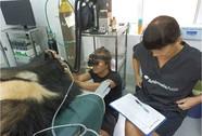 Động vật phải được đối xử nhân đạo