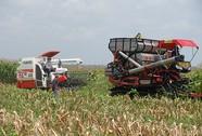 Bầu Đức mê nông nghiệp công nghệ cao