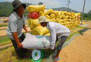 Doanh nghiệp trả chỉ tiêu xuất khẩu gạo