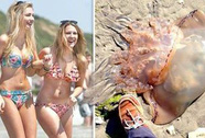 Sứa khổng lồ dạt bãi biển Anh