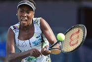 Venus Williams đang trở lại