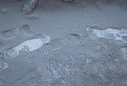 Tuyết đen xuất hiện ở Siberia