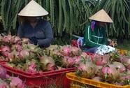 Thanh long Việt Nam được cấp phép xuất khẩu sang New Zealand