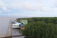 70 năm mất khoảng 60% diện tích rừng ngập mặn